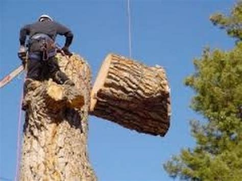 Tree Felling Lanseria
